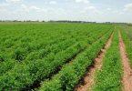 عملیات کشاورزی