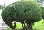 هنر درخت آرایی