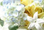 رازهای شخصیتی شما از زبان گلهای تولدتان